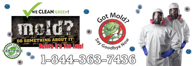 Michigan-Mold-Remediation