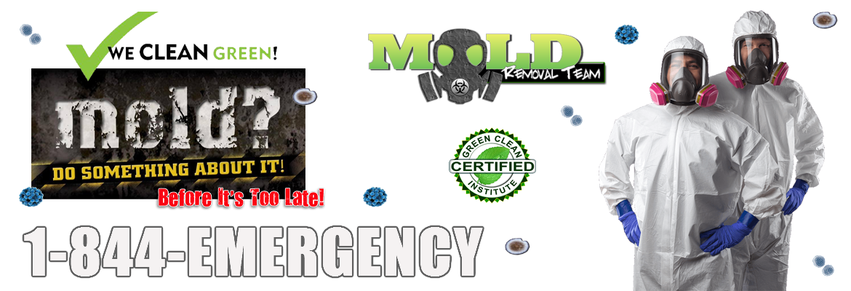 Mold-Removal-MI