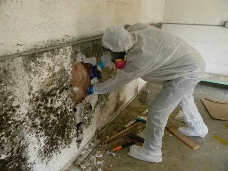 mold remediation services of michigan