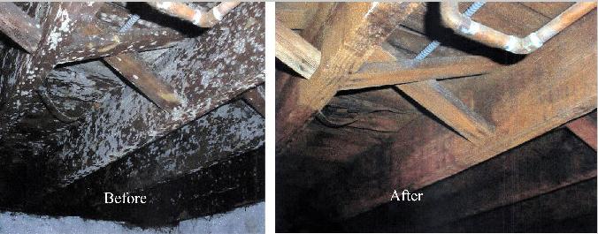 mold-damage-removal mi