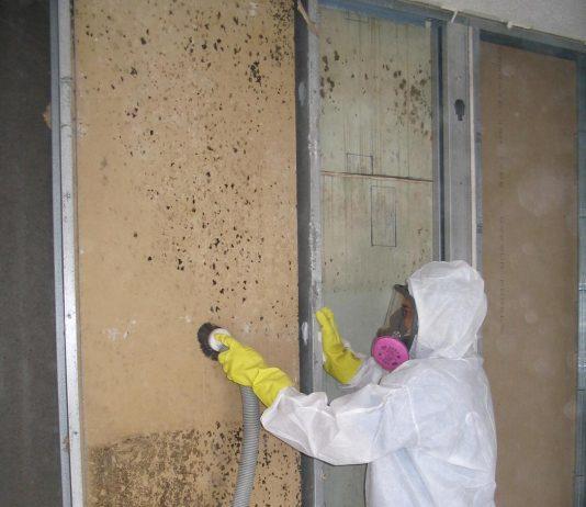 mold removal services mi mold remediation company. Black Bedroom Furniture Sets. Home Design Ideas