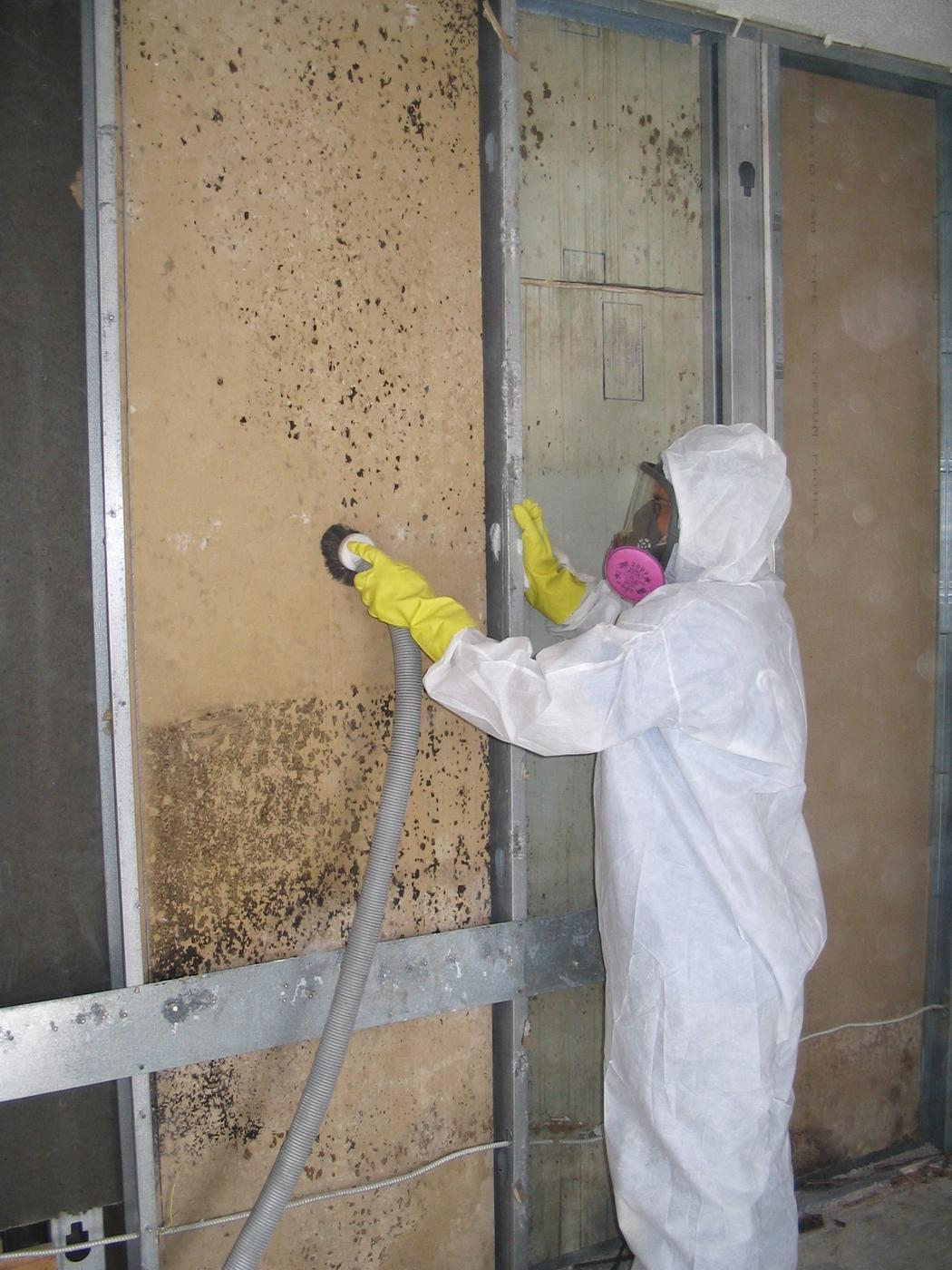 Does Cleaning With Bleach Kill Mold Mold Removal Michigan